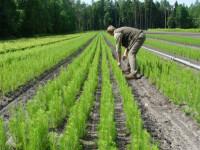 Sezonowa praca w Szwecji bez języka przy sadzonkach leśnictwo Kristianstad