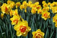 Sezonowa praca Anglia od zaraz przy zbiorach kwiatów w Newquay