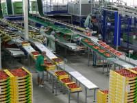Praca Szwecja od zaraz bez znajomosci języka pakowanie owoców w Norrköping