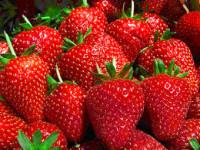 Dam pracę w Anglii sezonową przy zbiorach owoców bez znajomości języka 2016 Cantenbury