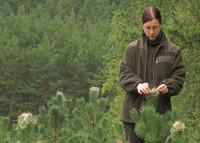 Dam sezonową pracę w Danii dla grup bez języka Vejle sortowanie i pielęgnacja drzewek