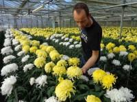 Praca we Francji za granicą przy kwiatach w ogrodnictwie Dolina Loary