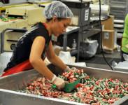 Holandia praca pakowanie cukierków bez znajomości języka od zaraz Etten Leur