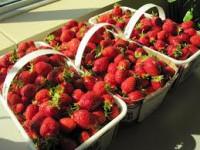 Od zaraz Anglia praca sezonowa zbiory truskawek Ledbury bez języka