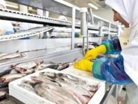Od zaraz praca w Danii przy pakowaniu na produkcji rybnej z j. angielskim Skagen