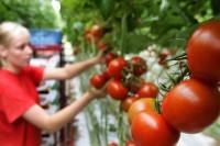 Dam sezonową pracę w Niemczech zbiory warzyw bez języka Oranienburg