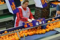 Dam pracę w Danii od zaraz przy pakowaniu owoców bez języka Næstved