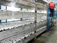 Zbiór pieczarek – sezonowa praca w Holandii z zakwaterowaniem