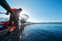 Fizyczna praca Norwegia od zaraz bez języka na farmie rybnej w Horten