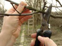 Ogrodnictwo praca Holandia w centrum ogrodniczym pielęgnacja drzewek