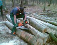 Dam sezonową pracę w Holandii przy wycince drzew bez języka od zaraz Utrecht