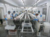 Dania praca na produkcji w przetwórstwie rybnym dla par styczeń 2017
