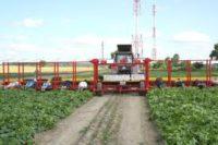 Dam sezonową pracę w Niemczech od zaraz zbiory sałaty, pomidorów, ogórków Radebeul