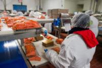 Filetowanie ryb praca w Danii na produkcji od zaraz w Hirtshals 2017