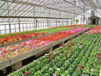 Oferta sezonowej pracy w Niemczech przy kwiatach bez języka Drezno 2017