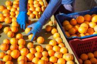 Od zaraz Szwecja praca dla par bez znajomości języka przy sortowaniu owoców Uppsala