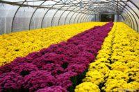 Od zaraz sezonowa praca w Niemczech ogrodnictwo przy kwiatach bez języka Westfalia