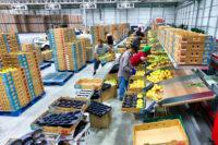 Bez języka fizyczna praca Szwecja od zaraz przy sortowaniu owoców Uppsala