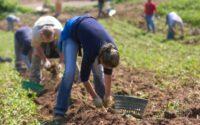 Bez języka oferta sezonowej pracy w Norwegii od marca 2020 w rolnictwie Moss