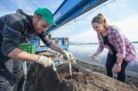 Zbiory szparagów sezonowa praca Anglia od kwietnia 2020 Ipswich