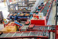 Anglia praca dla par od zaraz przy pakowaniu-sortowaniu owoców bez języka w Kent UK