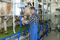 Od zaraz sezonowa praca Szwecja bez języka w rolnictwie jako dojarz 2020