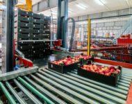 Sortowanie owoców fizyczna praca Holandia bez języka dla każdego od zaraz, Haga