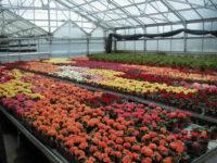 Praca za granicą we Francji w ogrodnictwie przy kwiatach szklarniowych, Paryż 2021