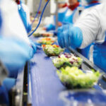 Produkcja i pakowanie sałatek od zaraz bez języka praca w Holandii 2021, Rijnsburg