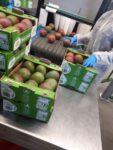 Bez języka fizyczna praca w Holandii dla par od zaraz przy pakowaniu owoców, Haga