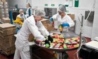 Od zaraz oferta pracy w Czechach pakowanie żywności bez znajomości języka Opawa