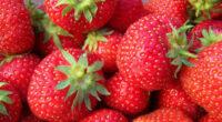 Bez języka oferta sezonowej pracy w Szwecji zbiory truskawek od zaraz 2021