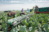 Zbiory warzyw 2021 bez znajomości języka sezonowa praca Anglia od zaraz w St Columb Major